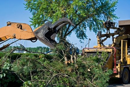 shredder machine: Heavy duty equipment used for tree removal.