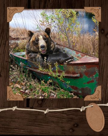 rowboat: Brown bear in rusted rowboat.