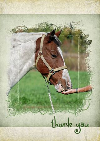 alfalfa: Horse eating alfalfa out of a hand.