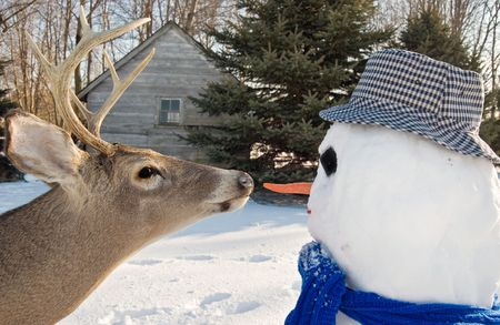 frigid: Big buck going for the carrot nose on snowman. Stock Photo
