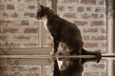 Tabby cat in window.