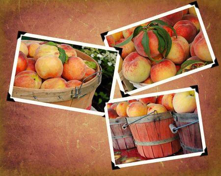 Peach images in snapshot frame on textured background.