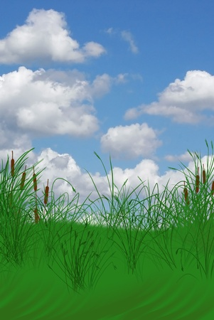 Cattails on grassy knoll with summer sky.