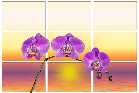 trio: Bright pink orchids with sunrise background.