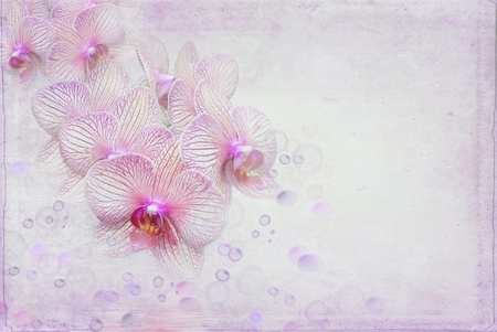 Orchid blossom with lavender bubbles. Stock Photo