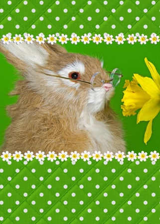 sniffing: Bunny wearing glasses and sniffing daffodil. Stock Photo