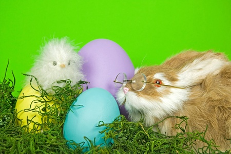 critters: Easter critters with dyed eggs.