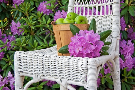 azalea: green apples in bushel basket on white wicker chair