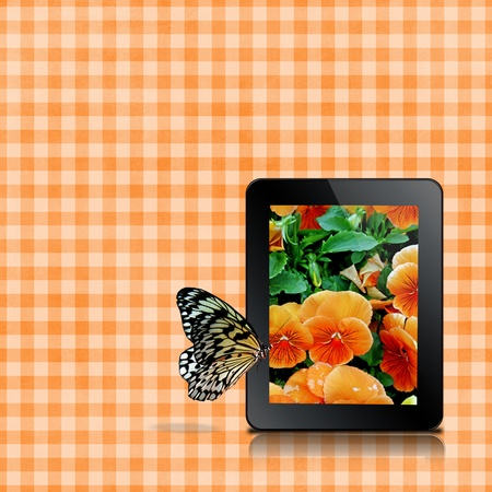butterfly on pansy photo with gingham background