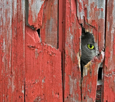 black hole: peeping barn cat Stock Photo