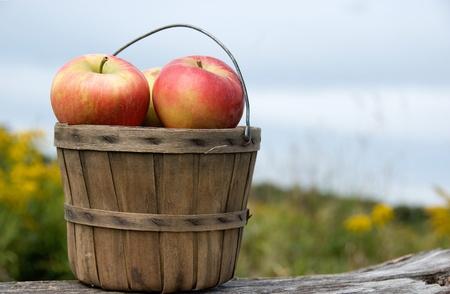 bushel: apples in old bushel basket on old log Stock Photo
