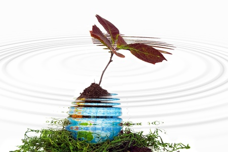 seedling growing: seedling growing in globe with water ripple reflection