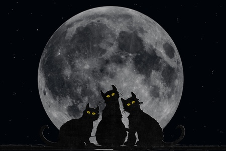 grey cat: Halloween cats with fill moon. Stock Photo