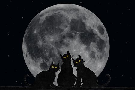 Halloween cats with fill moon. Standard-Bild