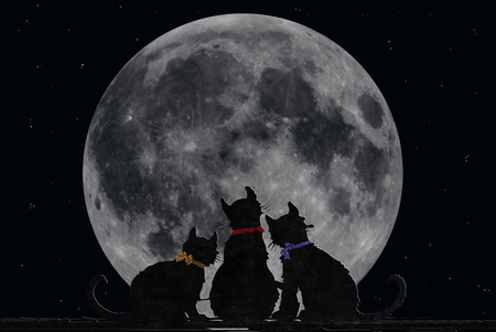 Silhouette of cats with full moon.