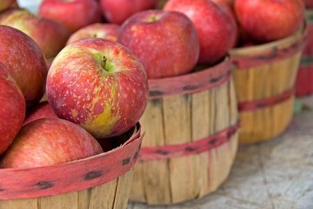 apples in bushel basket photo