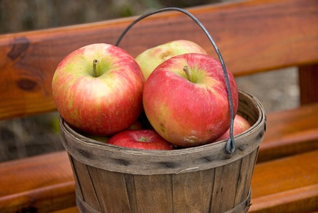 Fresh picked apples in basket  photo