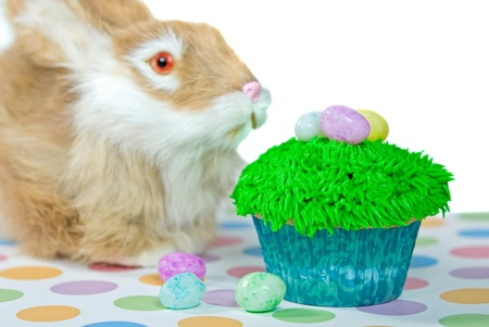 Bunny with Easter cupcake  photo