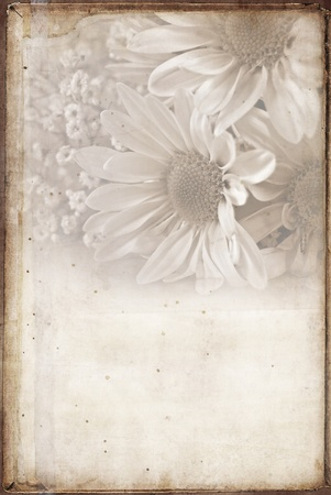 soft sepia daisies with texture