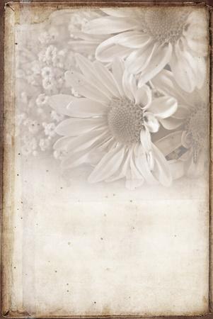 soft sepia daisies with texture 版權商用圖片 - 13065788