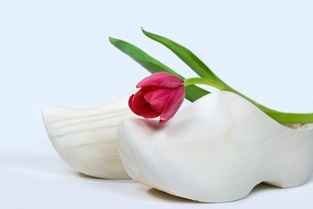 dutch: single red tulip on wooden shoe