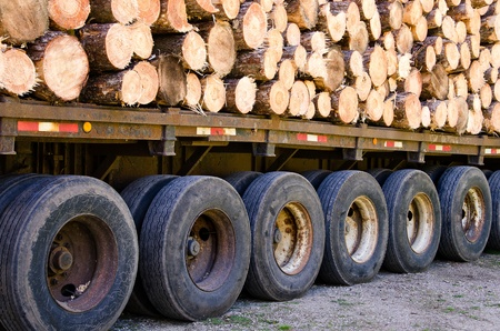 flatbed truck: pine logs on flatbed trailer