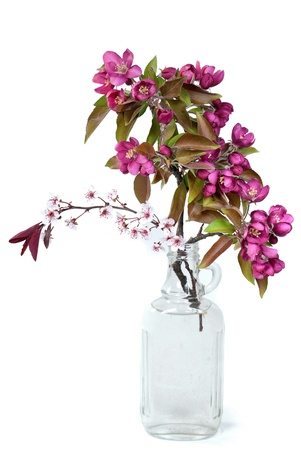 crabapple branches in vintage bottle photo