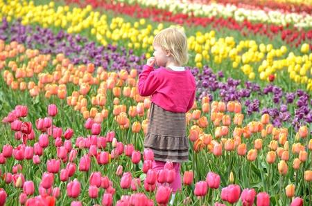 dutch girl: little girl in tulip field Stock Photo