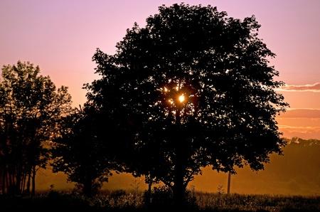 eventide: dusty sunset with oak tree