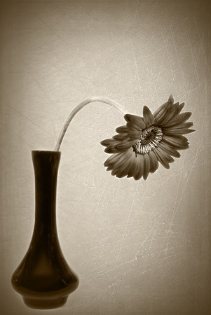 vignette: drooping daisy with sepia vignette