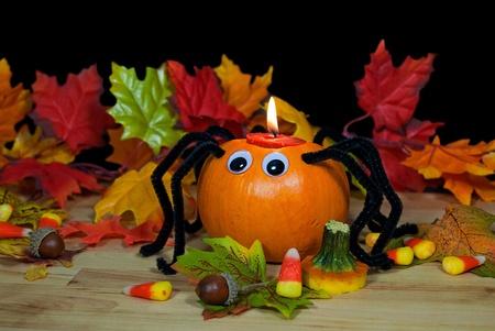 autumn pumpkin spider in leaves