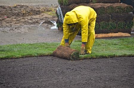 man laying sod in the rain Stock Photo