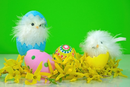 humor: Easter chicks with eggs and forsythia