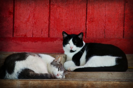 barn black and white: pair of napping barn cats Stock Photo