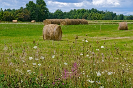 queen anne   s lace: hay bales in country field with wildflowers