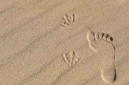 footprint and seagull tracks in beach sand photo