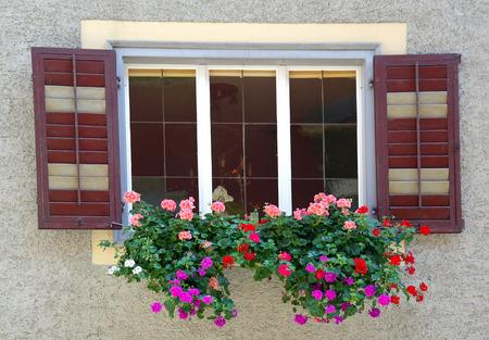 geraniums in window box Standard-Bild