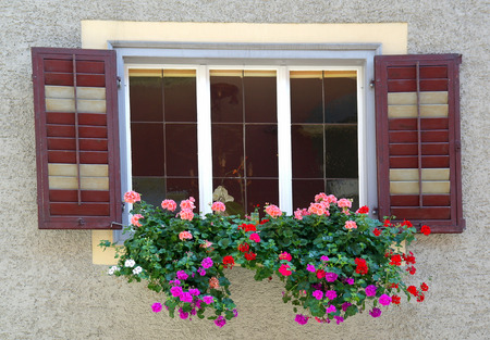 geraniums in window box Stock Photo