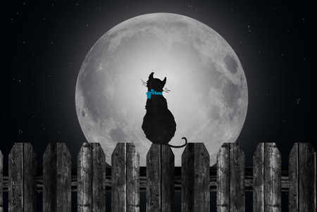 animal silhouette: silhouette of a cat staring at full moon