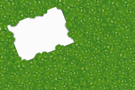 fourleaf: four-leaf clovers with white card Stock Photo