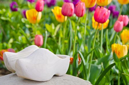 dutch: wooden shoe in Dutch tulip garden