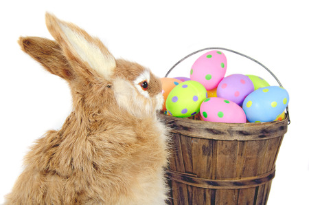 bunny with Easter eggs in old bushel basket photo
