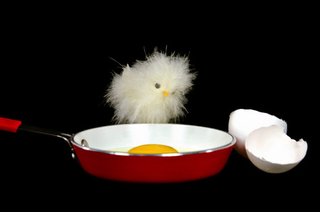 chick with fried egg in red frying pan photo