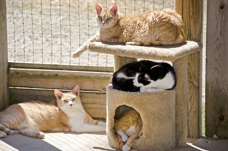 햇빛에 낮잠 고양이