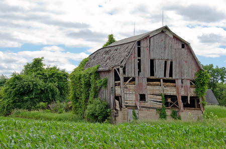 hayloft: dilapidated old barn in cornfield Stock Photo