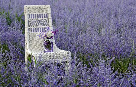 mason jar on chair in purple Russian sage Foto de archivo