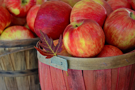 fall leaf with apples in wooden basket Stock Photo