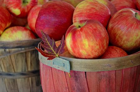 pomme rouge: tomber des feuilles avec des pommes dans le panier en bois