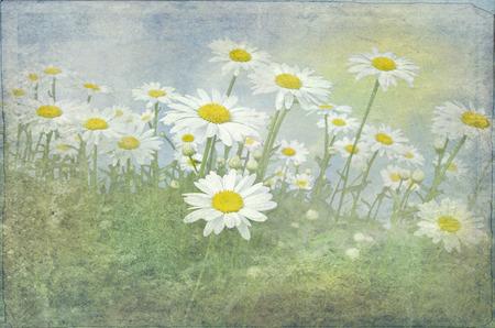 daisy field with soft texture overlay 版權商用圖片