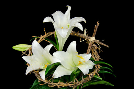 easter cross: Easter lily with crown of thorns and cross Stock Photo